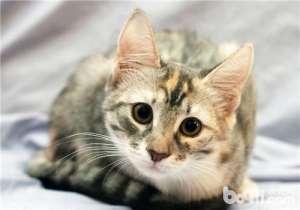 猫窝挑选的三大建议-成猫饲养